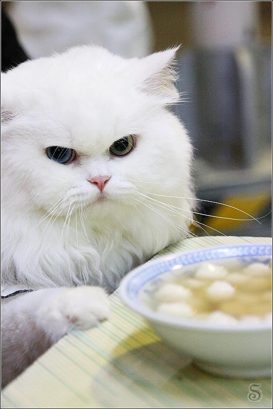 麻糬: 人客啊!今天來為大家介紹李家圓仔湯........(拍桌子)