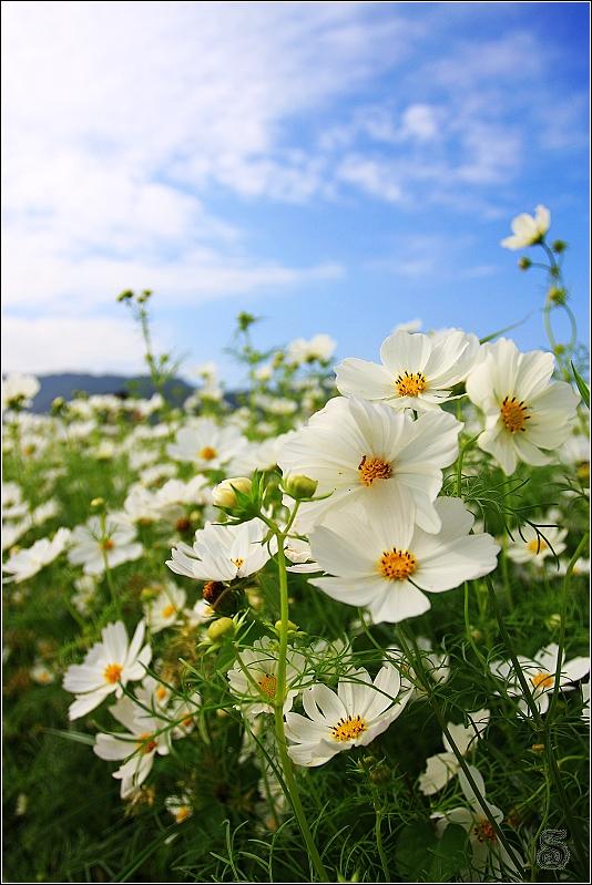 陽光悄悄的露臉,灑落在花瓣上