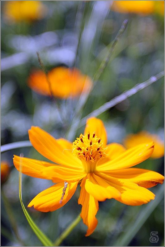 到後來的天氣偏陰暗,照出來的花朵味道也變成不同