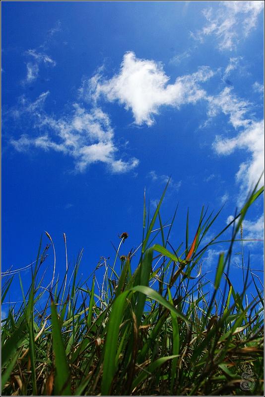 風很大,草狂飛,很想輕功草上飄