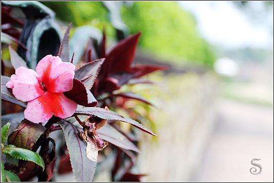 路邊的小紅花