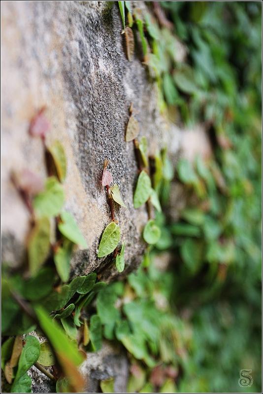 牆壁上的藤蔓