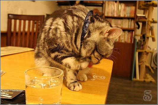 這傢伙還是喜歡桌上的水杯~