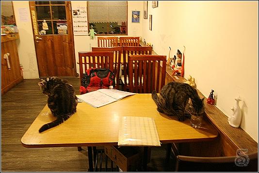 有沒有看到桌上二隻貓? 這二隻貓很不客氣就來喝水~~~ XDDD