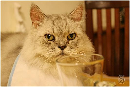 喝個水而已咩~何必偷拍下來XD 這裡面的貓咪都不怕鏡頭,對著他們連拍也甘之如飴