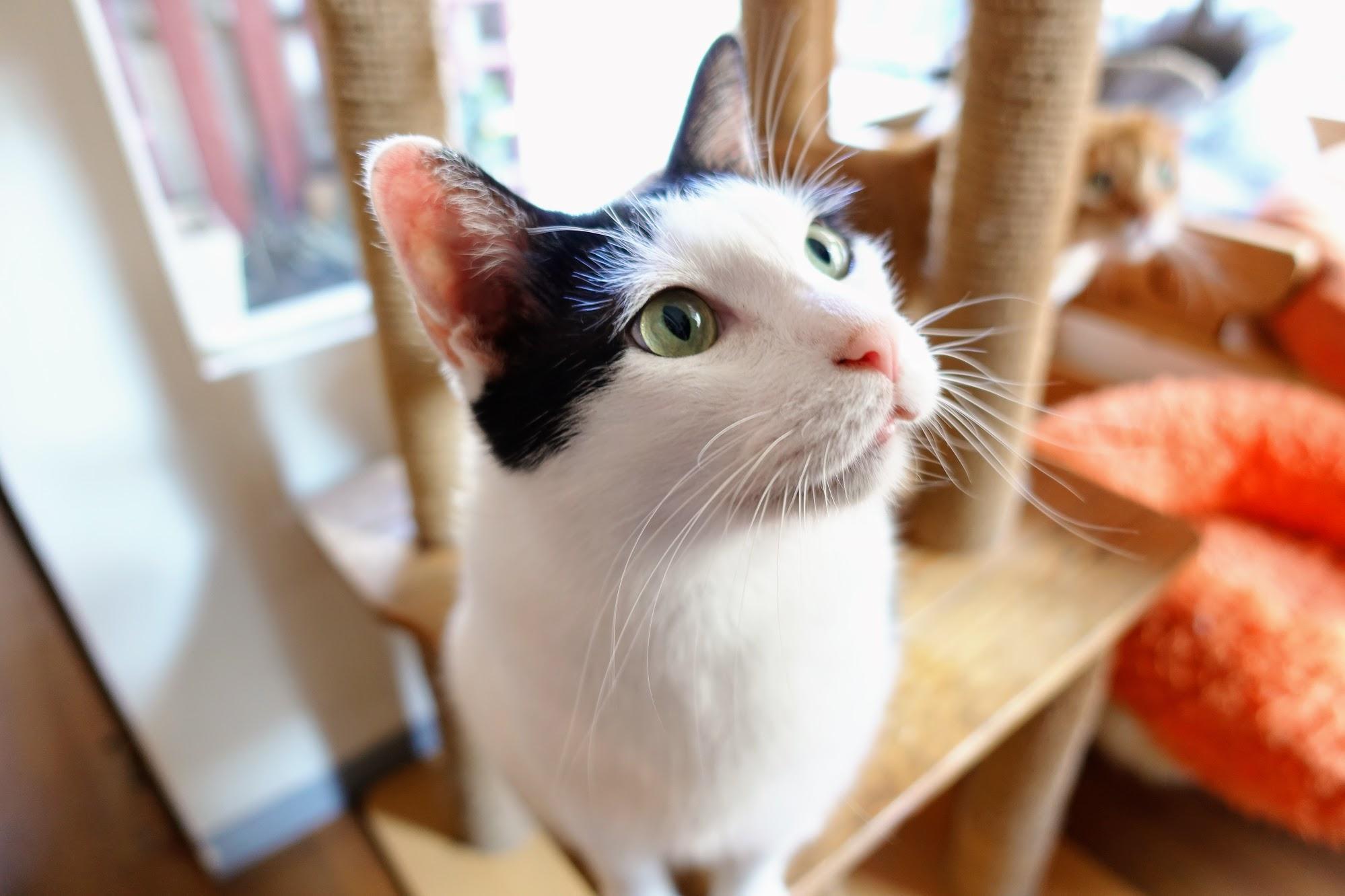 台南-貓咪咖啡館-(AT) Cats&Tea 茶飲輕食